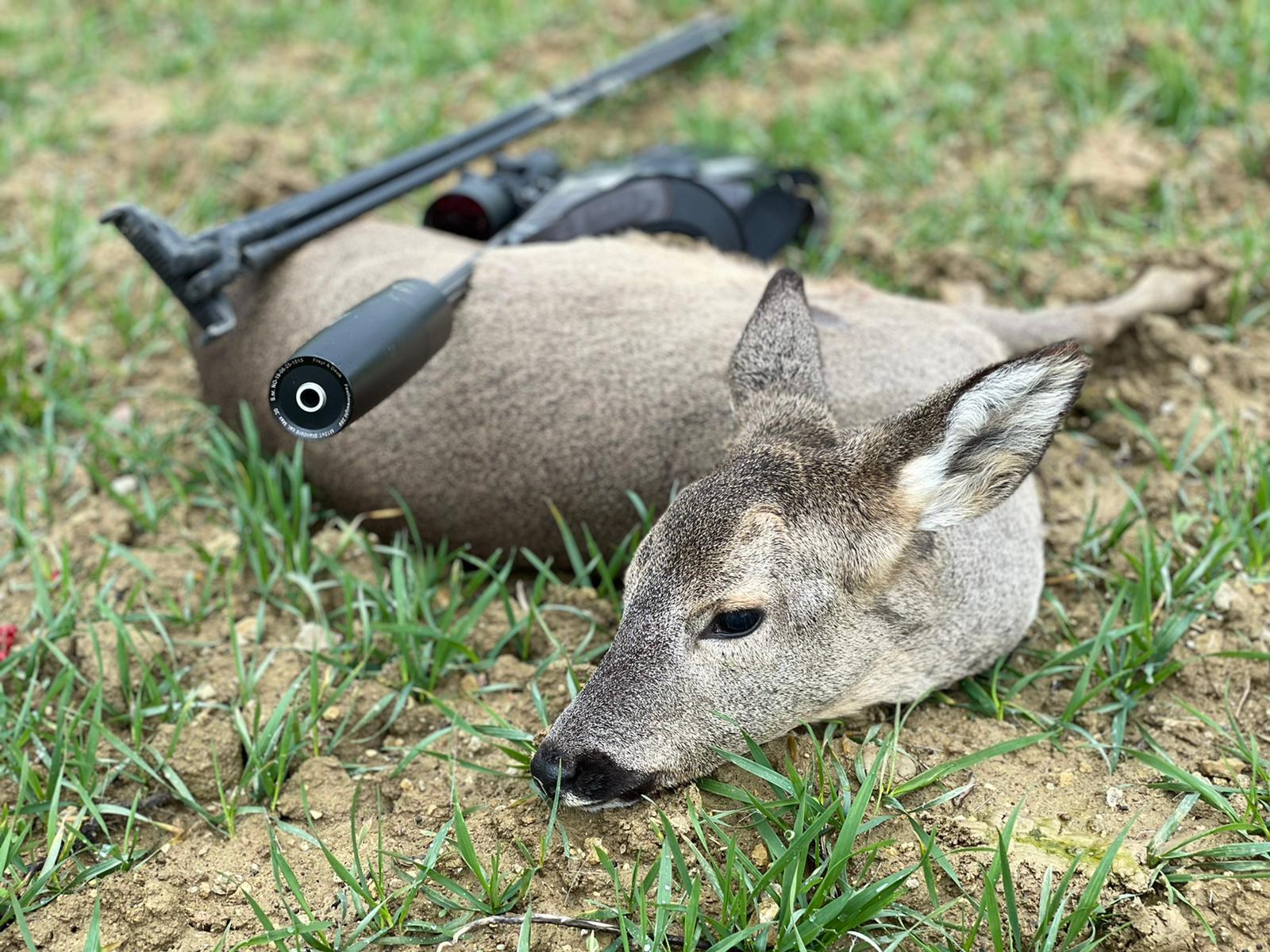 chasse du chevreuil en tir d'hiver